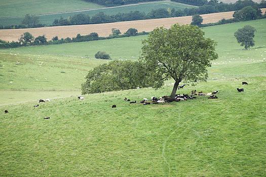 Steven Poulton - Friendly Tree