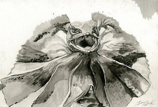 Frill by Ian Tullock