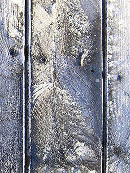 Frost Owl no01 by Greta Thorsdottir