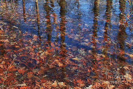 Frozen fall. Leaves frozen in ice. by Robert Wirth