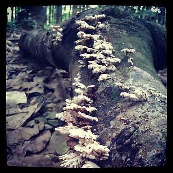 Fungi by Nawarat Namphon