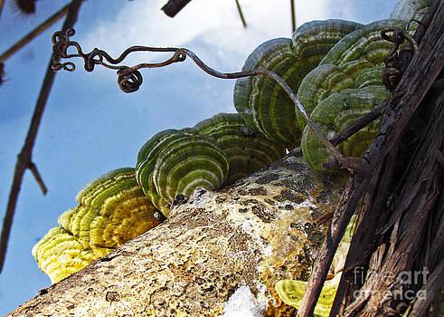 Fungus in Winter by Deborah Johnson