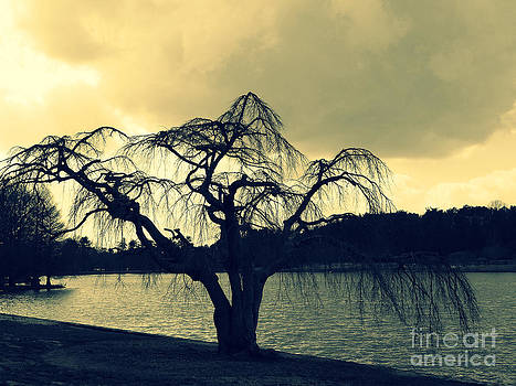 Furman Lake Tree by Crystal Joy Photography