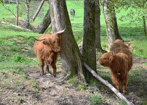 Fuzzy Cows by Bob Jackson