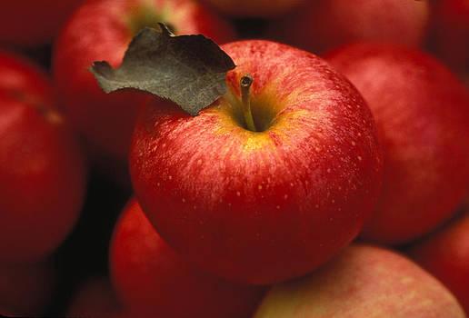 Gala Apples by Lyle Leduc