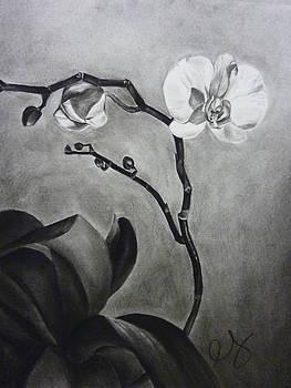 Galen's Orchid by Estephy Sabin Figueroa