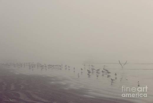 Svetlana Novikova - Galveston Island foggy morning