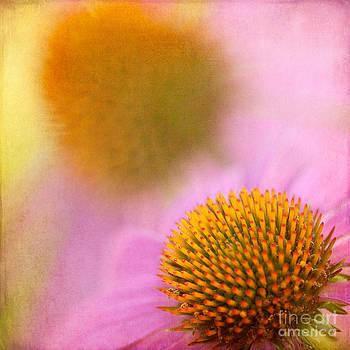 Lisa McStamp - Garden Delight