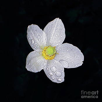 Byron Varvarigos - Garden Jewel And Rain