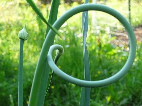 Sue Wild Rose - Garlic- Circle of Life