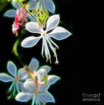 Gaura the Bride Abstract by Kathie McCurdy