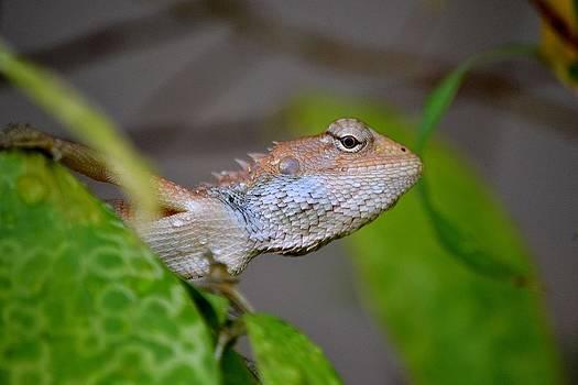 Gecko On Leaf by Ku Azhar Ku Saud