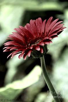 Gerbera Daisy Love by Melissa Nickle