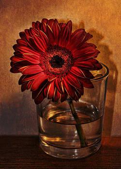 Gerbera by Julie Williams