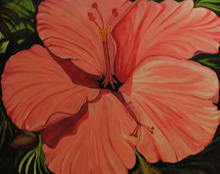 Giant Hibiscus in Pink by Melanie Wadman
