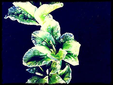 Gladiolus by Betsey Walker Culliton