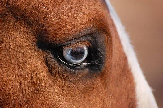 Glass Eye by Kate Holloman