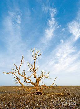 Gobi Desert  by Elena Filatova
