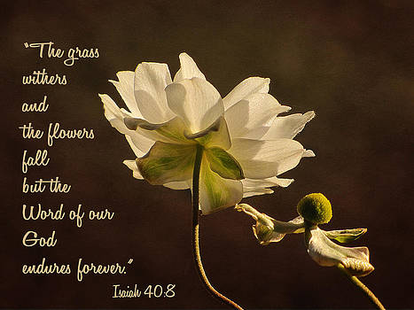 God's Word by Beckie Fitgerald
