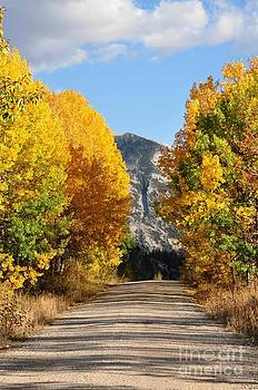 Golden Country Road by Diana Nigon