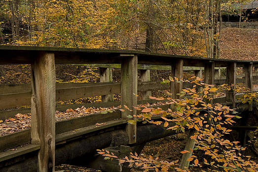 Golden Footbridge by Cindy Rubin