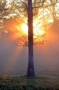 Golden Hour fog by Esther Luna