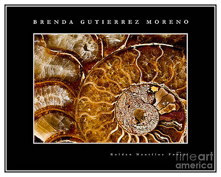 Golden Nautilus Fossil black border by Brenda Gutierrez Moreno
