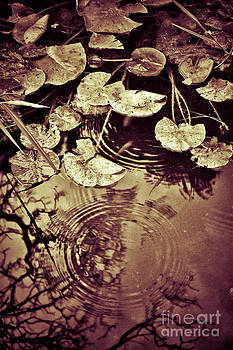 Silvia Ganora - Golden pond