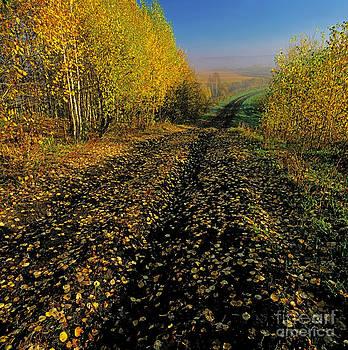 Golden road by Elena Filatova