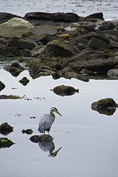 Marilyn Wilson - Heron at Botanical Beach