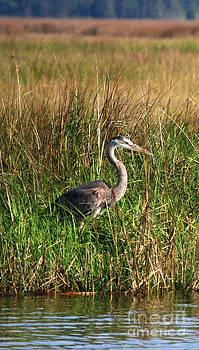 Good Morning - Blue Heron by Linda Mesibov