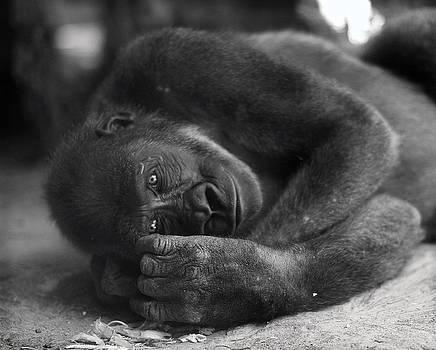 Gorilla by Yosi Cupano