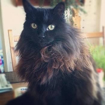 Gosis #cat#katt by Andrea Romero