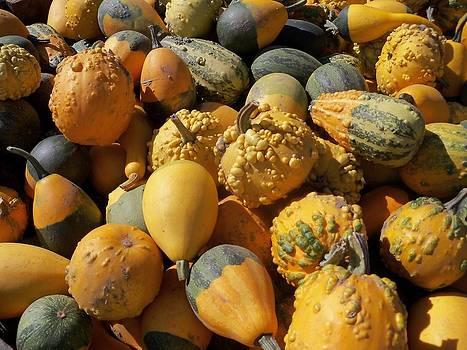 Gourds Galore by Sandy Collier