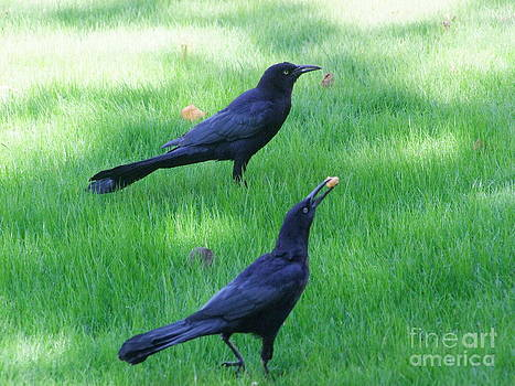 Mary Deal - Grackles in the Yard