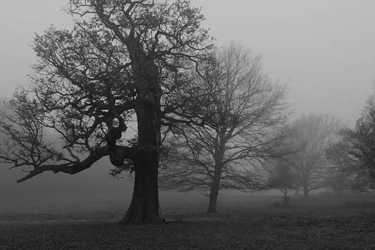 Gradual Trees by Maj Seda