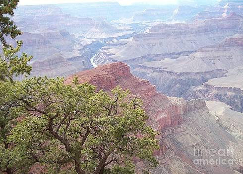 Grand Canyon Tree  by Deborah Cummins