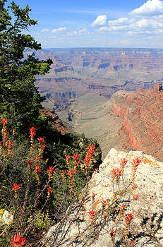 Grand Canyon View 2 by Tim Lin