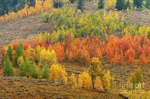 Sandra Bronstein - Grand Teton Fall Color