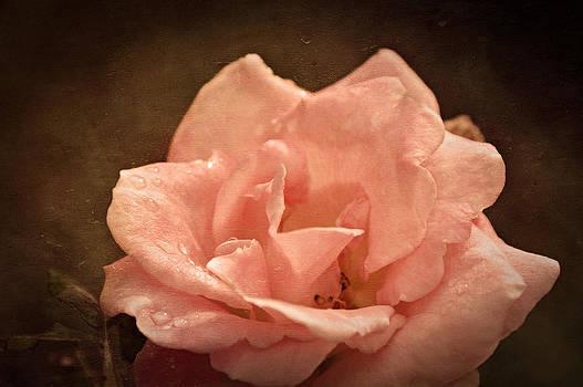 Grandmas Bloom by Terrie Taylor