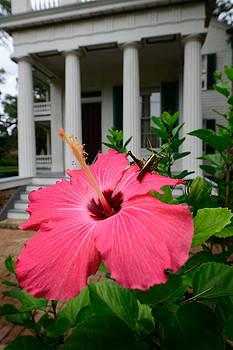 Bourbon  Street - Grasshopper Admiring Rosedown