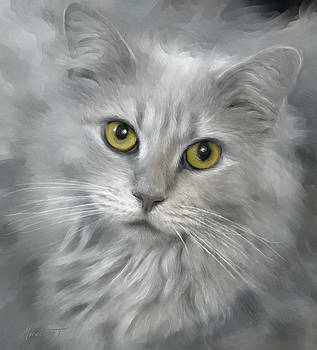 Gray Tabby by Ron Morecraft