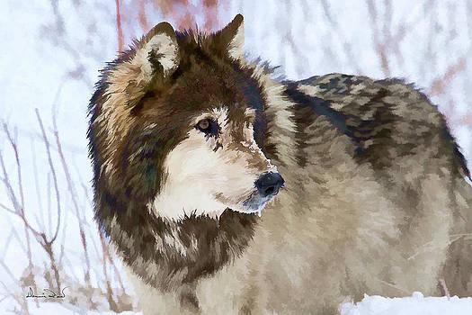 Gray Wolf Portrait by Dennis Fast