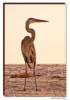 Great Blue Heron by Christine Stonebridge