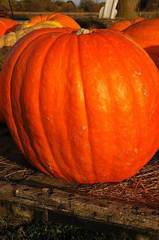 LeeAnn McLaneGoetz McLaneGoetzStudioLLCcom - Great Orange Pumpkin