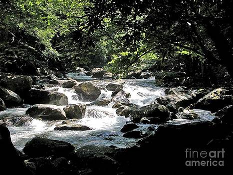 Great Stream Great Smokeys by Don F  Bradford