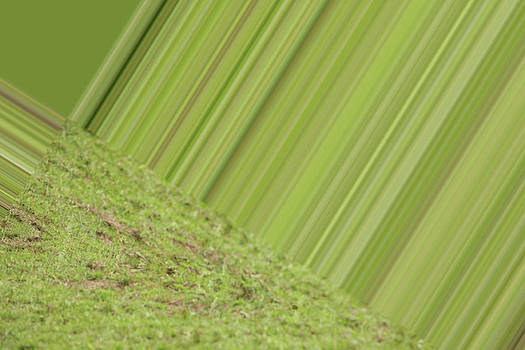 Karol Livote - Green Design
