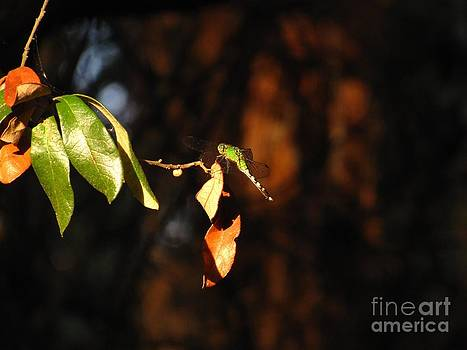 Green Dragonfly by Phil Penne