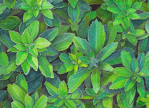 Green Gold by Yvonne Scott
