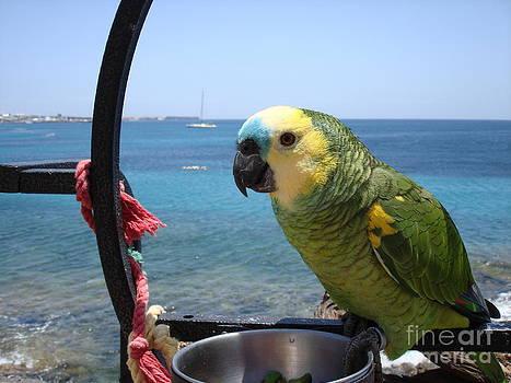 John Chatterley - Green Parrot